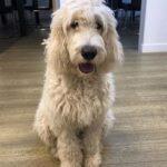 Office Dog – Rico